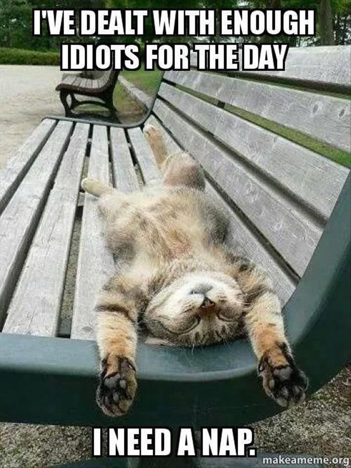 """""""I've dealt with enough idiots for the day. I need a nap."""" This cat is all of us. Funny Animal Pictures Of The Day – 26 Pics"""