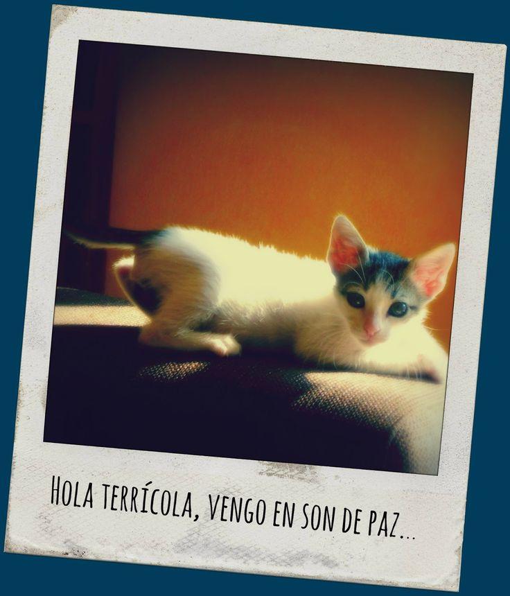 PyG Confesiones de una conversa al gatolicismo : Gatos, gatitos, gatetes y gatunadas