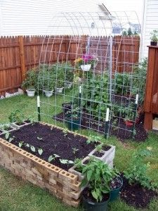 cool how-to blog for growing hanging squash
