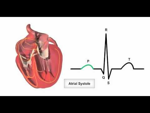 Anatomy Physiology Online - Cardiac conduction system and its relationship with ECG