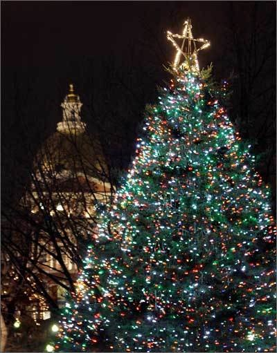 Boston Common's Christmas Tree.  Tree sent from NS every year to honour Boston for assistance provided in the aftermath of the Halifax Explosion.