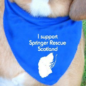 Fundraising bandana for springer rescue scotland