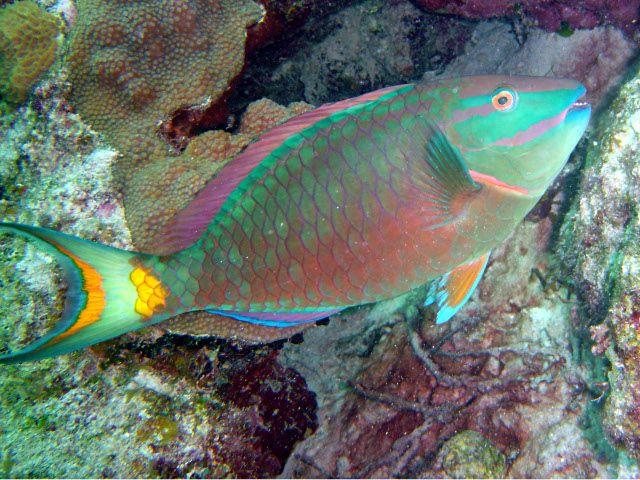 especies de peces de acuario las 25 mejores ideas sobre peces de agua dulce en