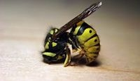How to Get Rid of Yellow Jackets Around Your Pool | eHow.com