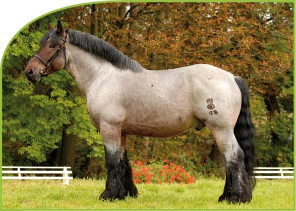 1000+ Images About Equine Is Fine On Pinterest