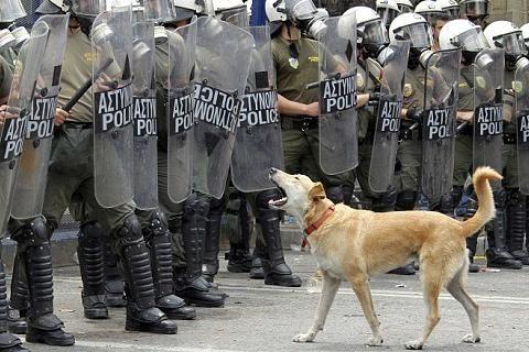 "Greece's famous riot dog ""Loukanikos""."