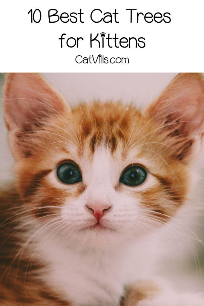 Top 10 Best Cat Trees For Kittens With Reviews Catvills In 2020 Cool Cat Trees Kitten Names Kitten Names Boy
