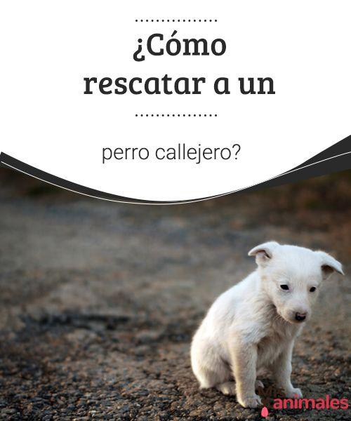 ¿Cómo rescatar a un perro callejero? Si encuentras un perro callejero, hay una serie de consejos que debes seguir para que puedas hacer un rescate seguro y adecuado. Aquí te los contamos. #rescatar #perro #consejos #callejero