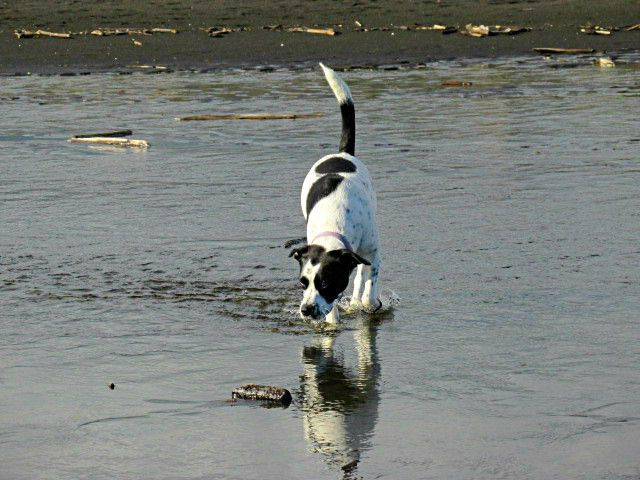 Paddling in the Koitiata Lagoon.