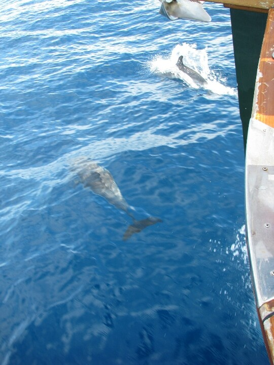 Dolfin keep us company on every motor yacht day cruise @ halkidiki www.charterayacht.gr