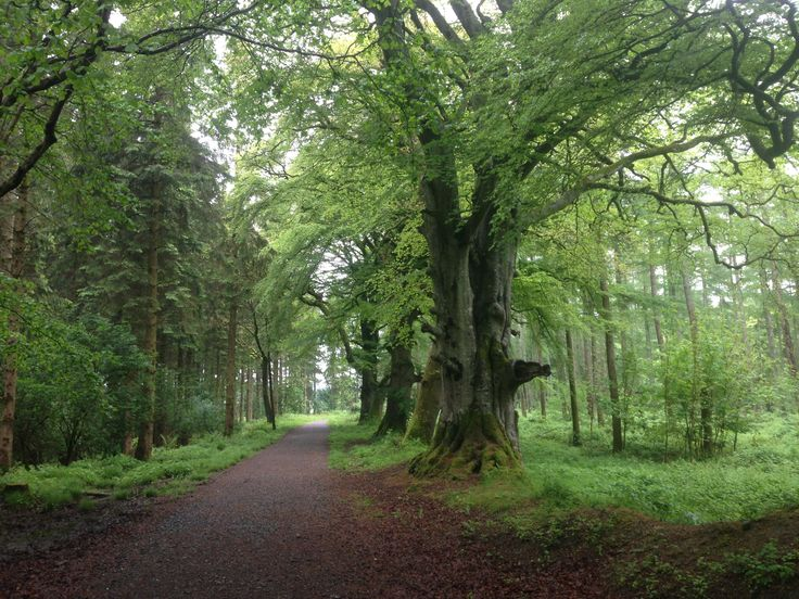 Kildare - Wood walk
