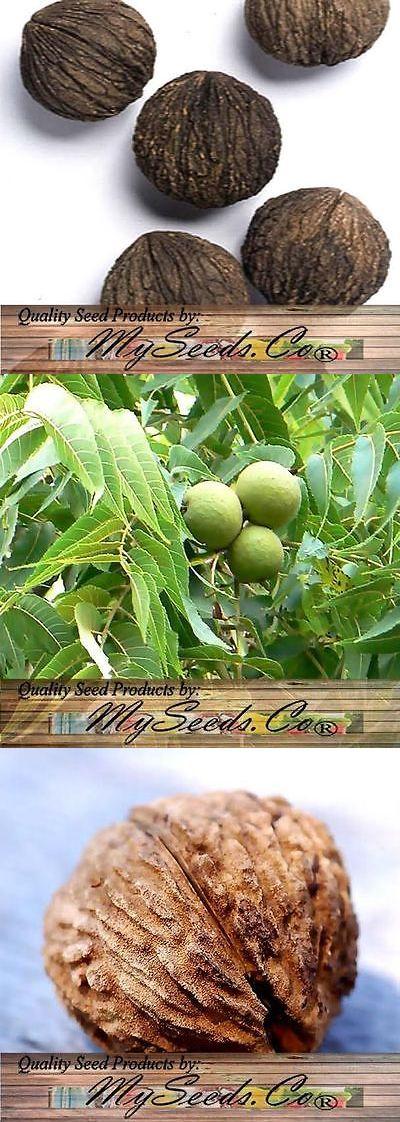 Lawn and Garden 40145: Black Walnut Tree Seeds , Juglans Nigra - Northern - Hardy To Zone 5 - Bulk -> BUY IT NOW ONLY: $120 on eBay!