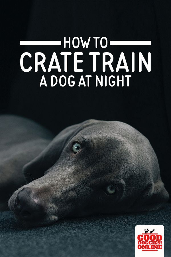How To Crate Train A Dog At Night Dog Training Tips Dog