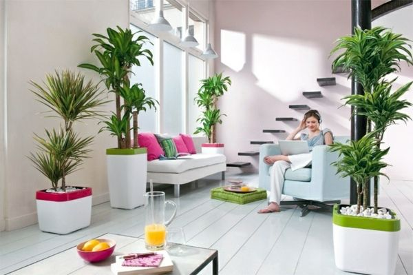 Image from http://www.avso.org/wp-content/uploads/files/1/8/0/feng-shui-plants-for-harmony-and-positive-energy-in-the-living-room-12-180.jpg.