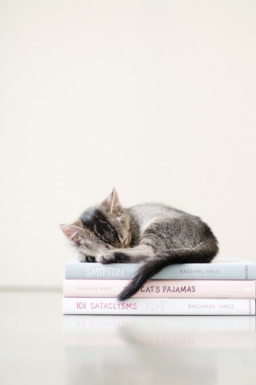 I love how this kitten is atop Rachael Hale's cat photography books. Perfect!