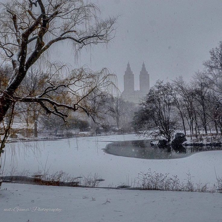 Central Park Moments by @mitzgami