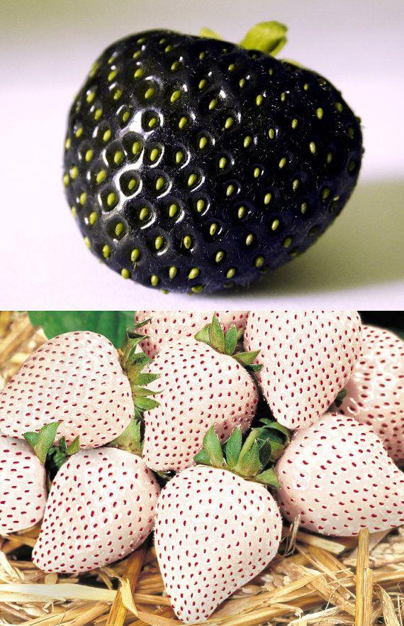 20 Samen seltene Schwarze Erdbeere 20 weißen von OneFlowerShop