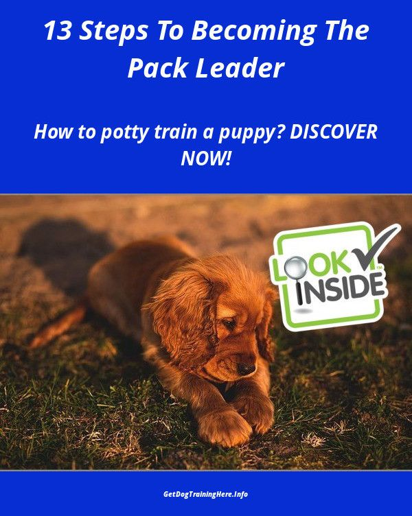 Train A Dog Not To Bark Dogtrainingtips Dogs Dog Training