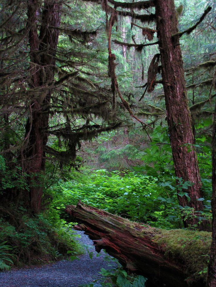 Tongass National Forest 1 by ShadowsStocks.deviantart.com on @DeviantArt