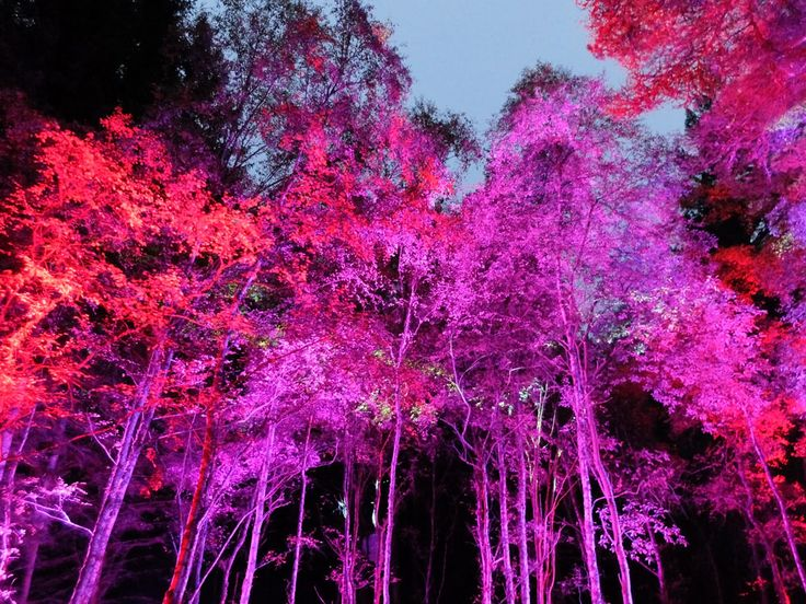 Enchanted Forest in Pitlochry