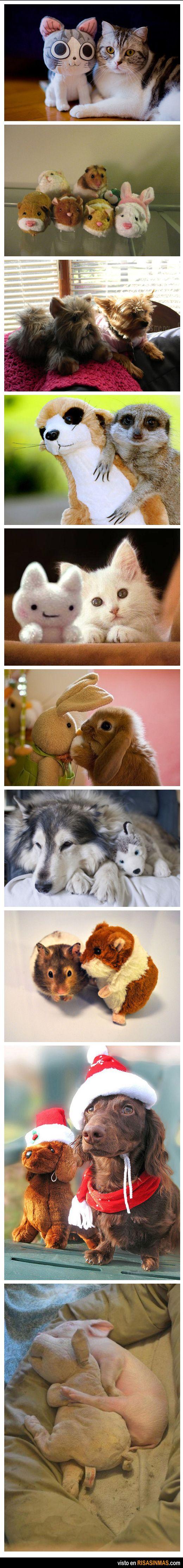 Simpática colección de imágenes de animales con peluches de ellos mismos.