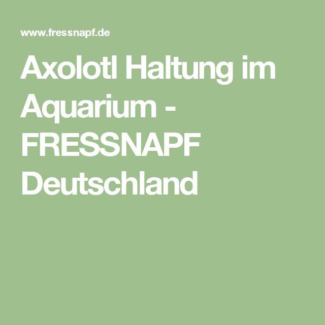 Axolotl Haltung im Aquarium - FRESSNAPF Deutschland