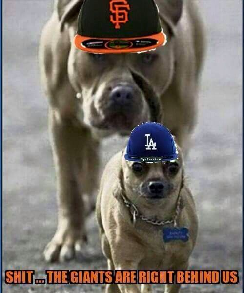 1000 Images About My Dodgers On Pinterest