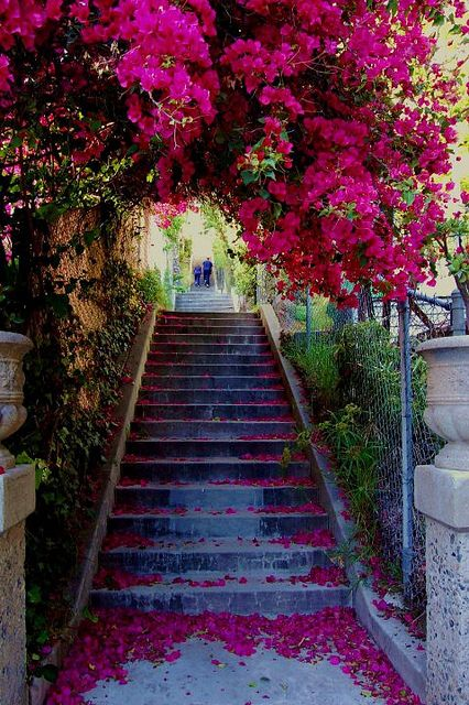 The secret stairs of LA