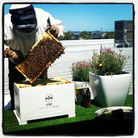 Doncaster BMW Bees #Melbourne