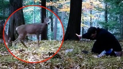 Incontra dei cervi selvatici in un bosco e riesce a dar loro da mangiare. La Stampa.it