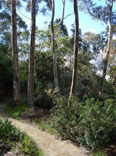 Gordon Ford's beautiful garden