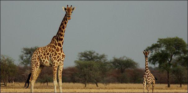 Le parc nationale de zacoumba