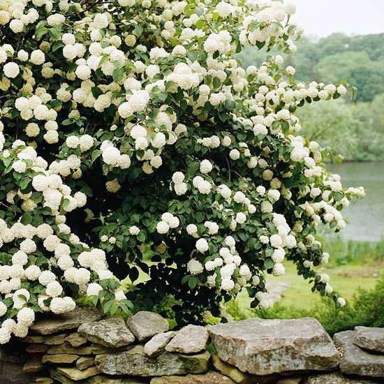 BHG list of flowering shrub hedges, great ideas for easy hedges.  // Great Gardens & Ideas //