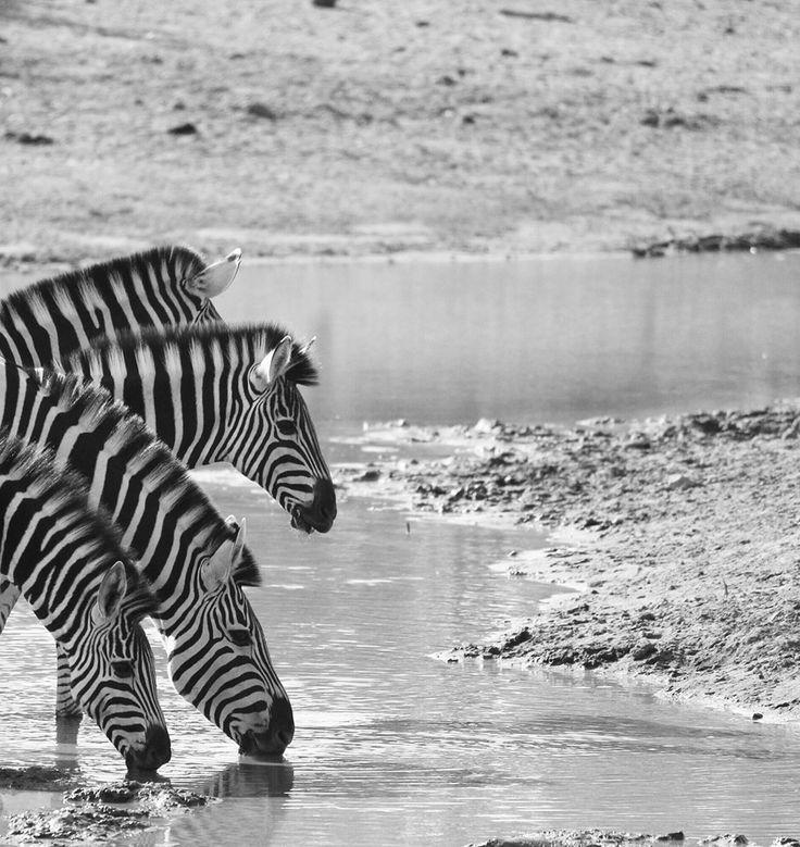 Kruger Park Top 10 Focus