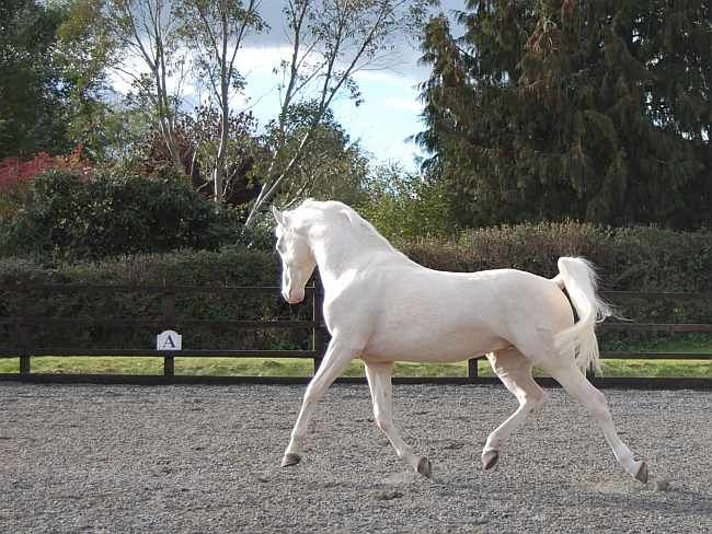17 Best Images About Equus On Pinterest Horses For