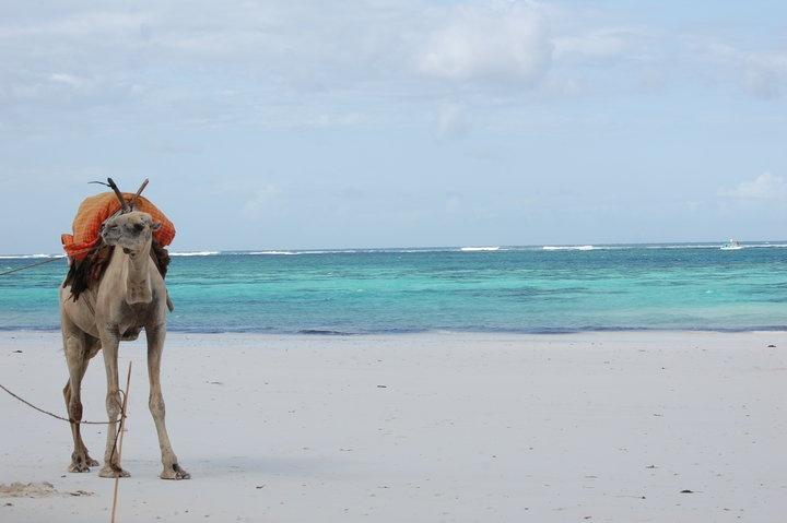 Kenya - land of awesome pristine beaches