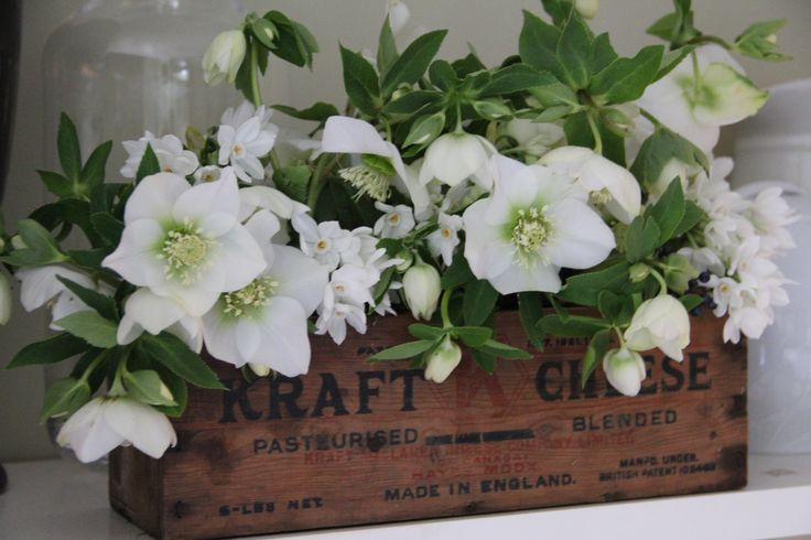 Winter flowers - hellebores and narcissus. Would make a lovely top table arrangement for a winter wedding!