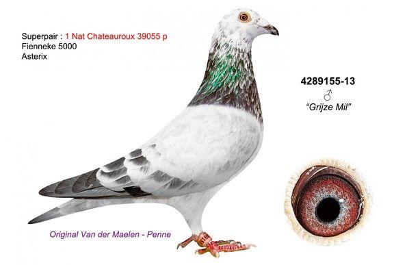 4289155-13 • Van der Maelen-Penne