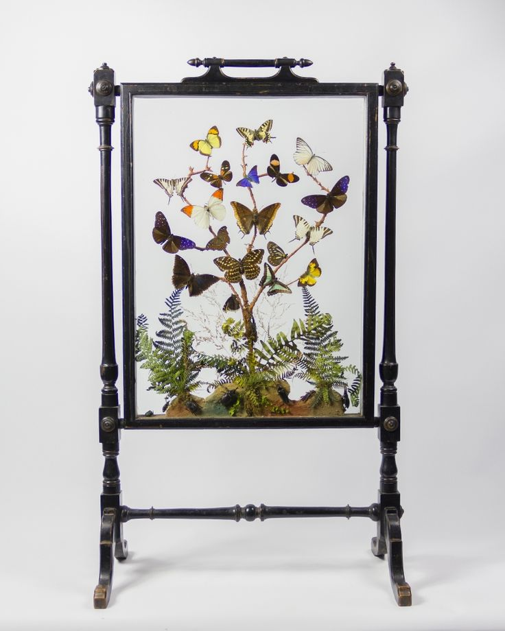 Taxidermy Butterfly Fire Screen