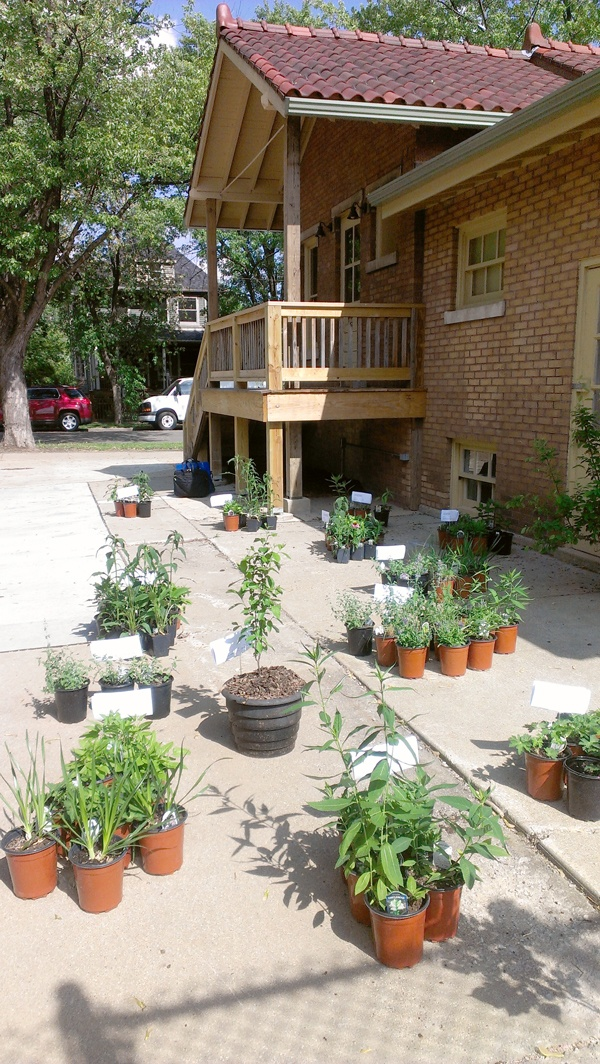 HCBA Plant Sale|Prairie Godmothers At Independence Park Bungalow. Thank You  To All You Who Joined Us At Our Garden Design Seminar And Purchased Native  ...