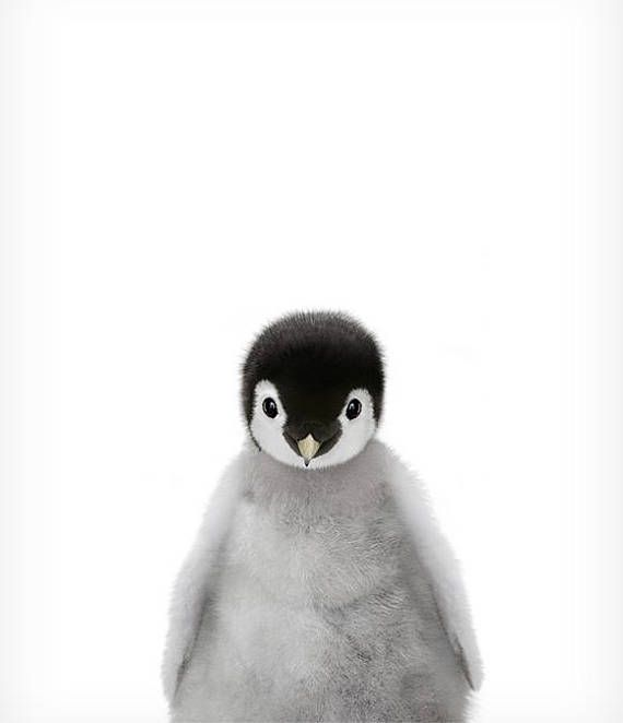 Child penguin print, Zoo animal nursery, The Crown Prints, Child animals nursery artwork, Child room decor, Nursery animal prints, Child animal artwork