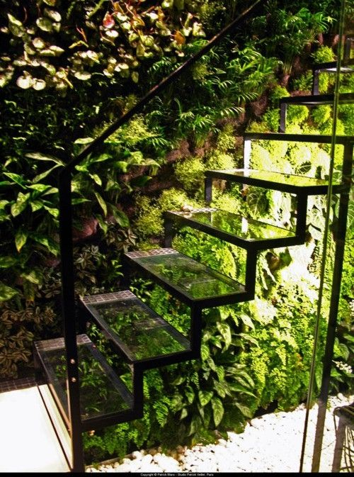Open riser staircase having transparent treads and underside lighting, above a thicket of greenery.