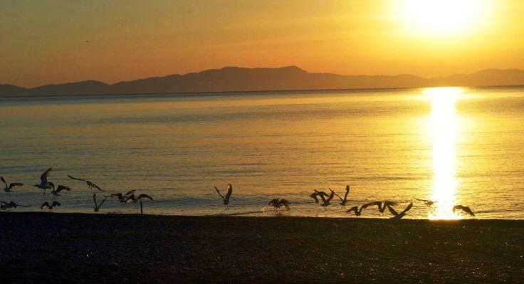 Seagulls ready to take off..... Psaropouli beach, Vassilika, Greece