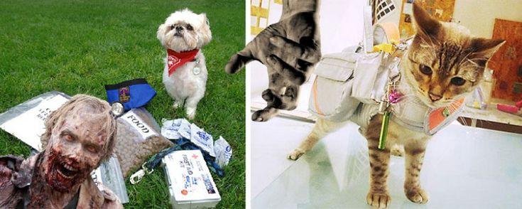 Les kits de survie pour chats et chiens en cas d'invasion de zombies