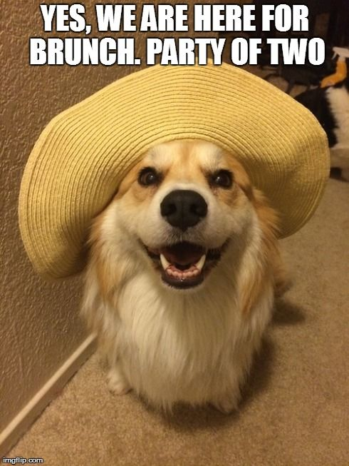 Corgis just go along with the silliness. I love them!