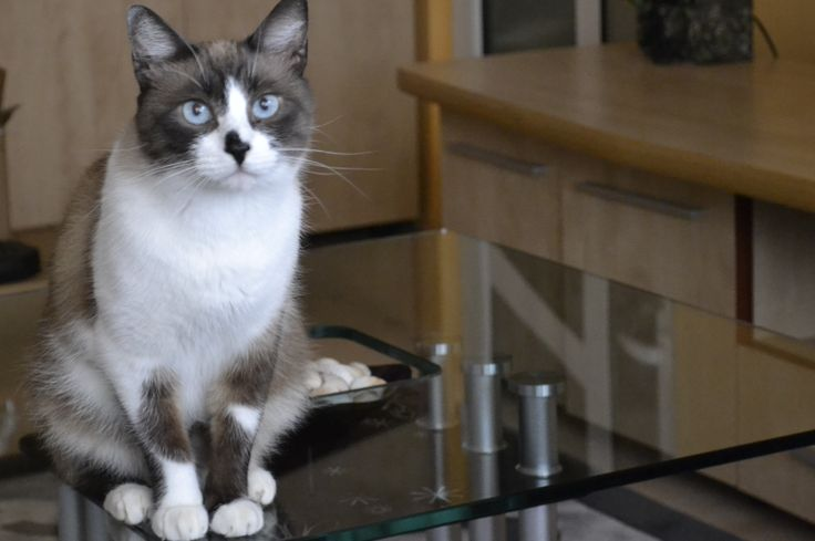 Cappucino,My darling cat