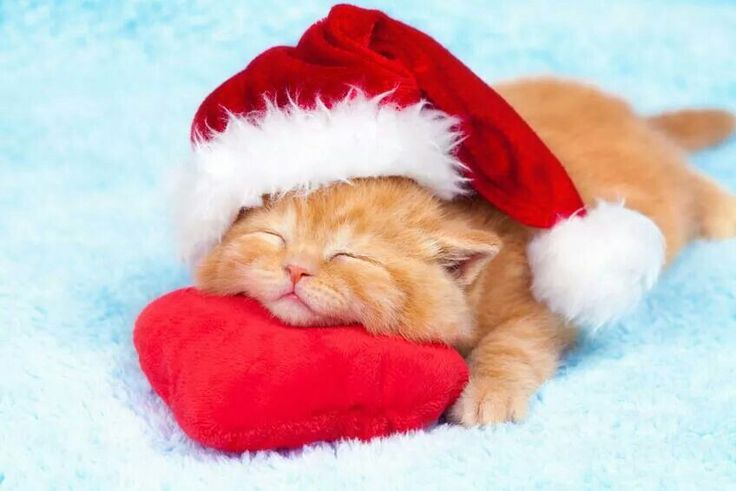 ❤️CHRISTmas ~ cute kitten with Santa hat