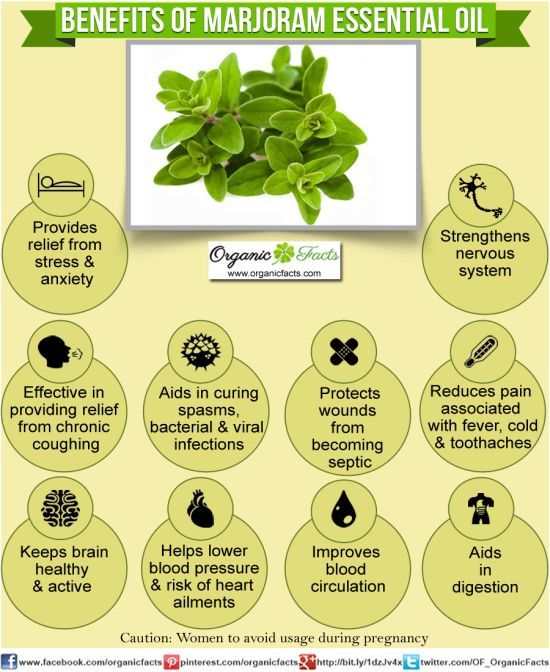Health Benefits of Marjoram ~ Provides relief from stress & anxiety, Relief from chronic coughing, Keeps brain healthy & active, Aids in bacterial & viral infection, Helps lower blood pressure & risk of heart ailments, Protects wounds, Improves blood circulation, Strengthens nervous system, Reduces pain from fever, cold & toothaches, Aids in digestion. *Avoid usage during pregnancy