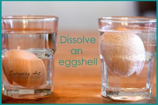 Science Fun: Dissolve an Eggshell by Everyday Art #science #kids #activity