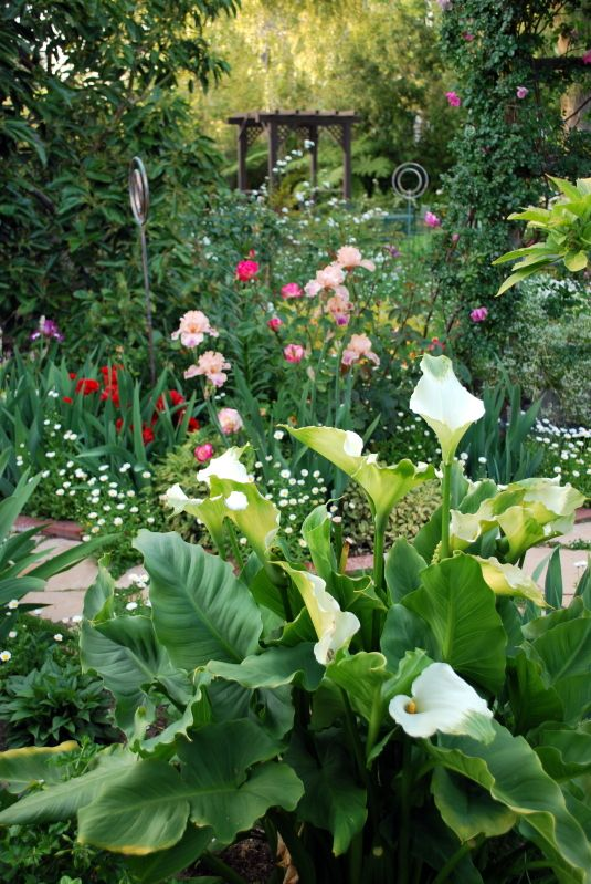 186 Best California Garden Style Images On Pinterest   Landscaping, Plants  And Gardens